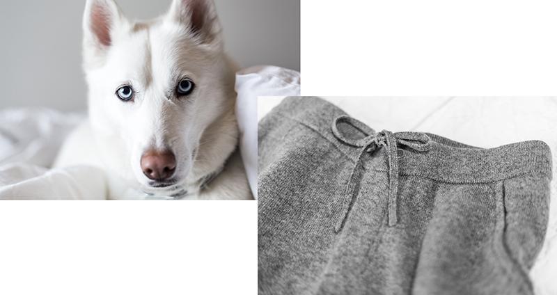 white husky