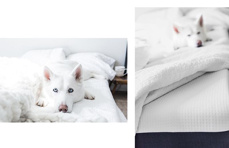 sleep like a dog